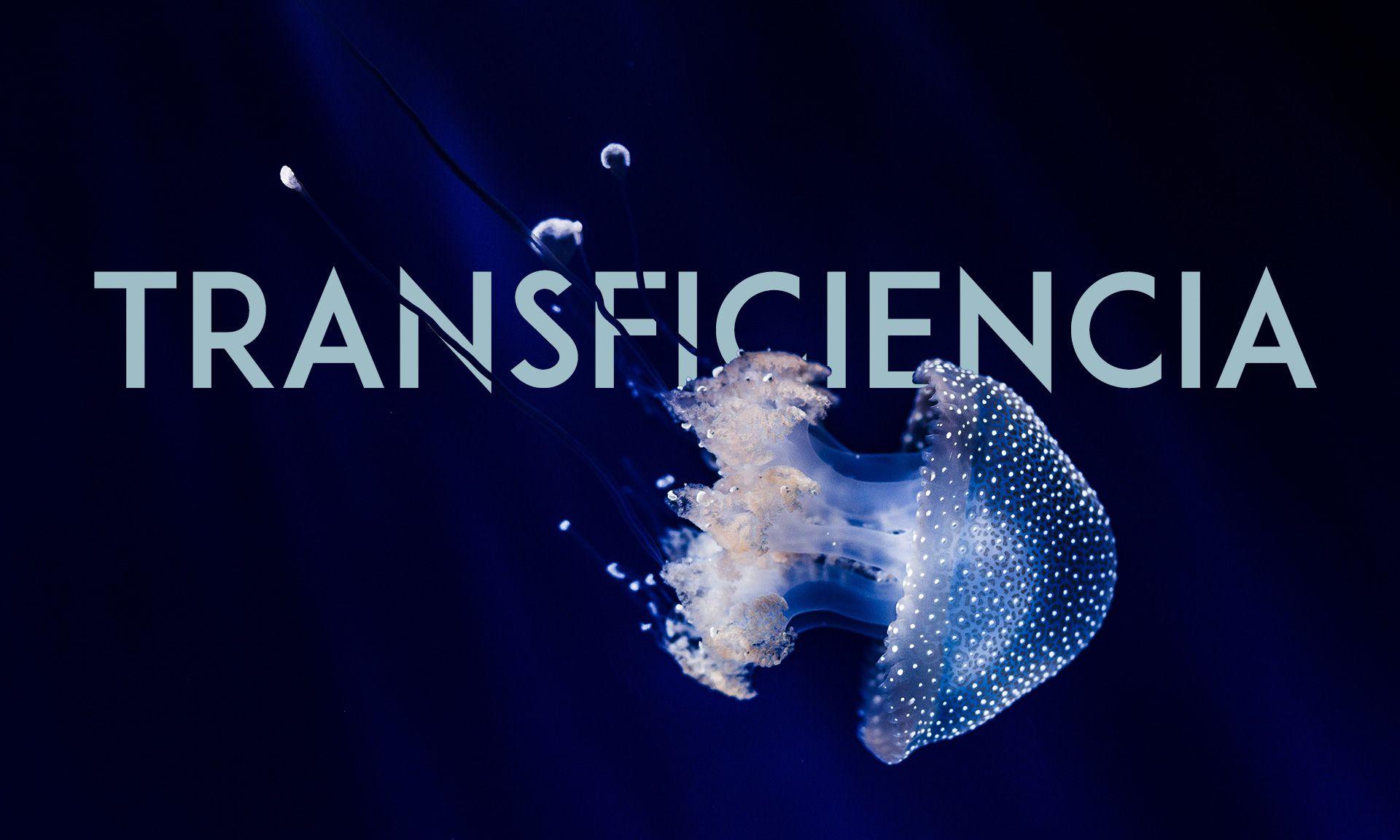 La transficiencia en el tercer sector